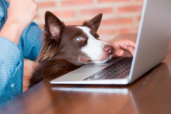 Pet shop online: tendências para o segmento